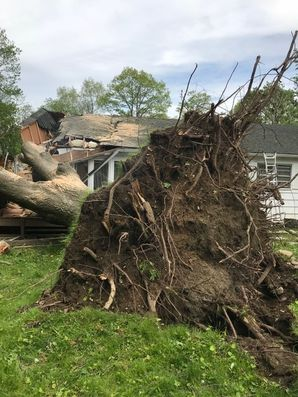 Fallen Tree from Storm Damage in North Salem, NY (1)