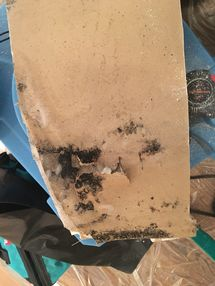 Mold Remediation in Scarsdale, NY (1)
