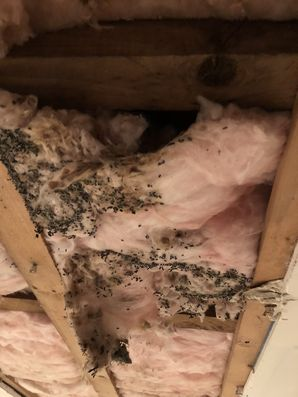 Mold Remediation in Eastchester, NY (2)